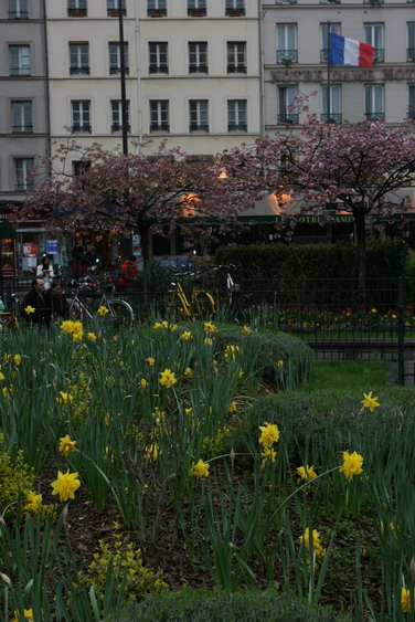 Jonquilles Paris